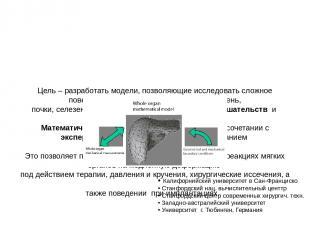 Цель – разработать модели, позволяющие исследовать сложное поведение мягких внут