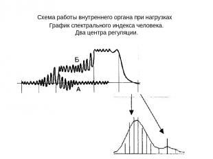 Схема работы внутреннего органа при нагрузках График спектрального индекса челов