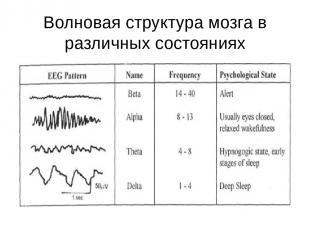 Волновая структура мозга в различных состояниях