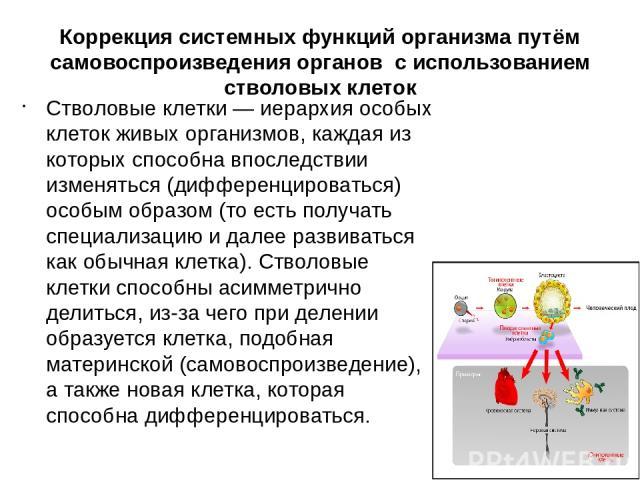 Коррекция системных функций организма путём самовоспроизведения органов с использованием стволовых клеток Стволовые клетки — иерархия особых клеток живых организмов, каждая из которых способна впоследствии изменяться (дифференцироваться) особым обра…