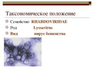 Таксономическое положение Семейство RHABDOVIRIDAE Род Lyssavirus Вид вирус бешен