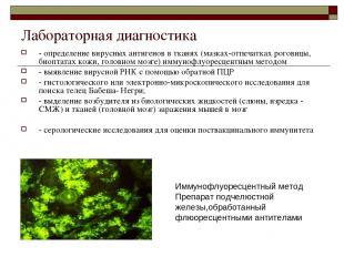 Лабораторная диагностика - определение вирусных антигенов в тканях (мазках-отпеч