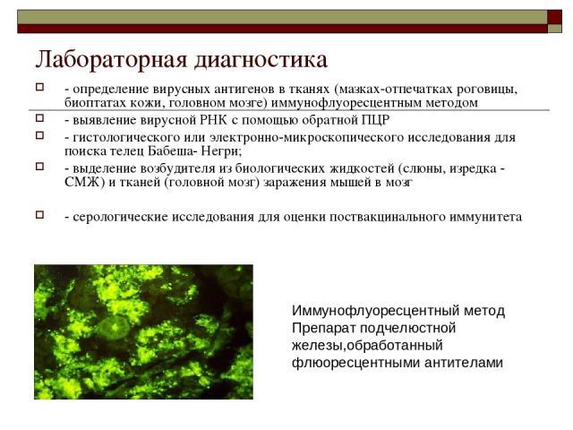 Лабораторная диагностика - определение вирусных антигенов в тканях (мазках-отпечатках роговицы, биоптатах кожи, головном мозге) иммунофлуоресцентным методом - выявление вирусной РНК с помощью обратной ПЦР - гистологического или электронно-микроскопи…