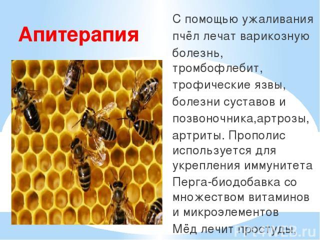 Лечение варикоза укусами пчел