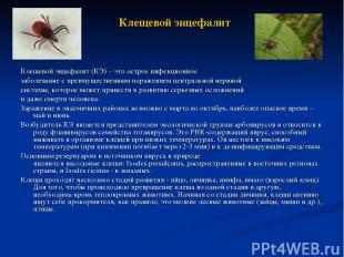 Клещевой энцефалит Клещевой энцефалит (КЭ) – это острое инфекционное заболевание
