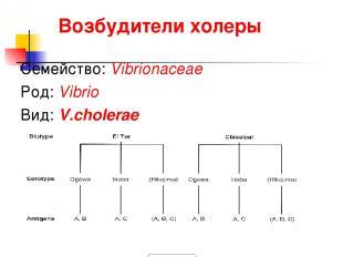 Возбудители холеры Семейство: Vibrionaceae Род: Vibrio Вид: V.cholerae 900igr.ne
