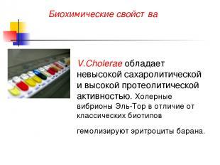 Биохимические свойства V.Cholerae обладает невысокой сахаролитической и высокой