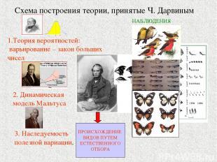 Схема построения теории, принятые Ч. Дарвиным 1.Теория вероятностей: варьировани
