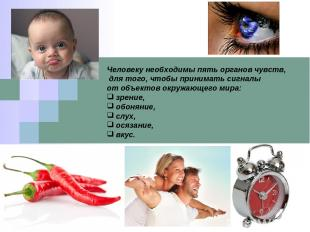 Человеку необходимы пять органов чувств, для того, чтобы принимать сигналы от об