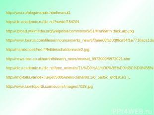 http://yaci.ru/blog/manuls.html/manul1 http://dic.academic.ru/dic.nsf/ruwiki/284
