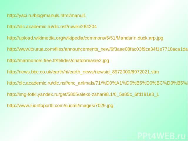 http://yaci.ru/blog/manuls.html/manul1 http://dic.academic.ru/dic.nsf/ruwiki/284204 http://upload.wikimedia.org/wikipedia/commons/5/51/Mandarin.duck.arp.jpg http://www.tourua.com/files/announcements_new/6f3aae08fac03f9ca34f1e7710aca1da1331645405.jpg…