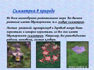 Симметрия в природе Во всем многообразии растительного мира все высшие растения