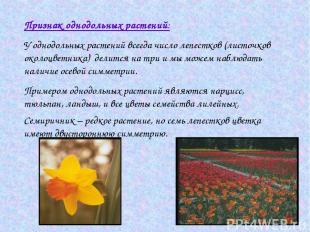 Признак однодольных растений: У однодольных растений всегда число лепестков (лис