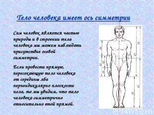 Тело человека имеет ось симметрии Сам человек является частью природы и в строен