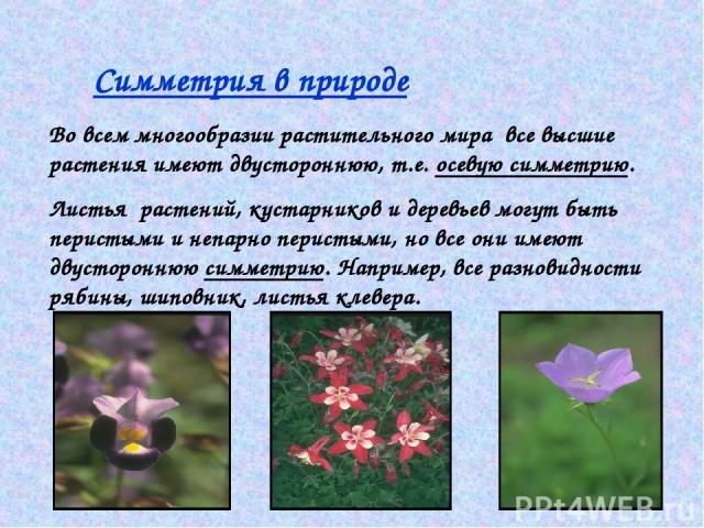 Симметрия в природе Во всем многообразии растительного мира все высшие растения имеют двустороннюю, т.е. осевую симметрию. Листья растений, кустарников и деревьев могут быть перистыми и непарно перистыми, но все они имеют двустороннюю симметрию. Нап…