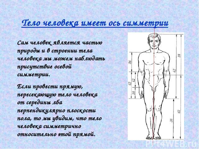 Тело человека имеет ось симметрии Сам человек является частью природы и в строении тела человека мы можем наблюдать присутствие осевой симметрии. Если провести прямую, пересекающую тело человека от середины лба перпендикулярно плоскости пола, то мы …