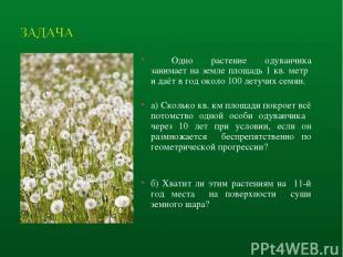 Одно растение одуванчика занимает на земле площадь 1 кв. метр и даёт в год около