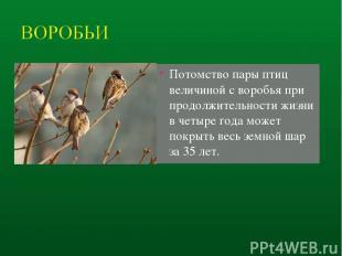 Потомство пары птиц величиной с воробья при продолжительности жизни в четыре год