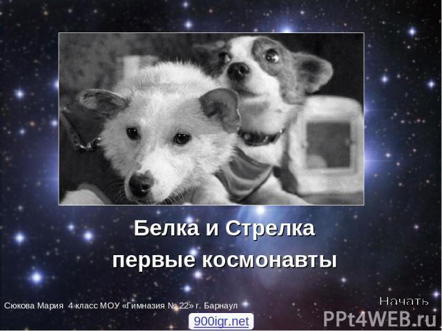 Белка и Стрелка первые космонавты Сюкова Мария 4 класс МОУ «Гимназия № 22» г. Барнаул 900igr.net