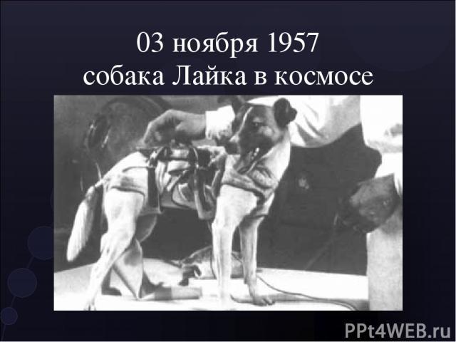 03 ноября 1957 собака Лайка в космосе