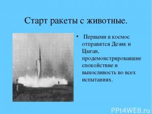 Старт ракеты с животные. Первыми в космос отправятся Дезик и Цыган, продемонстри