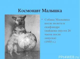 Космонавт Малышка Собака Малышка после полета в скафандре (найдена спустя 26 час