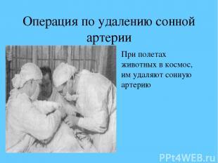 Операция по удалению сонной артерии При полетах животных в космос, им удаляют со