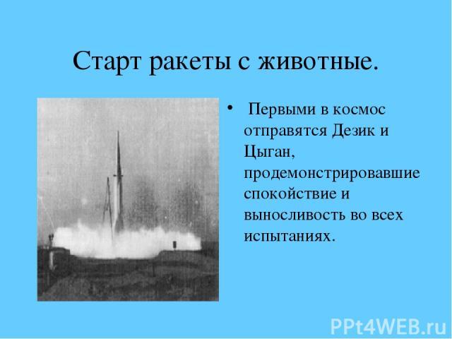 Старт ракеты с животные. Первыми в космос отправятся Дезик и Цыган, продемонстрировавшие спокойствие и выносливость во всех испытаниях.