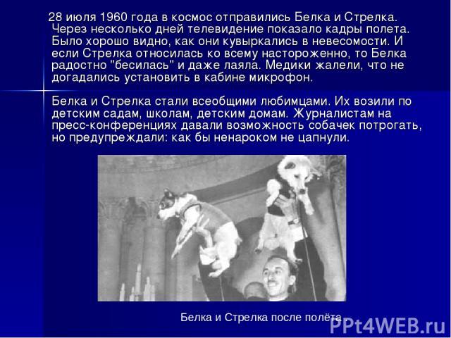 28 июля 1960 года в космос отправились Белка и Стрелка. Через несколько дней телевидение показало кадры полета. Было хорошо видно, как они кувыркались в невесомости. И если Стрелка относилась ко всему настороженно, то Белка радостно