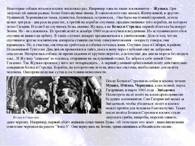 Некоторые собаки летали в космос несколько раз. Например одна из таких космонавток – Жулька. При запусках ей давали разные, более благозвучные имена. В одном полете она звалась Жемчужиной, в другом - Пушинкой. Хорошенькая такая, пушистая, беленькая,…