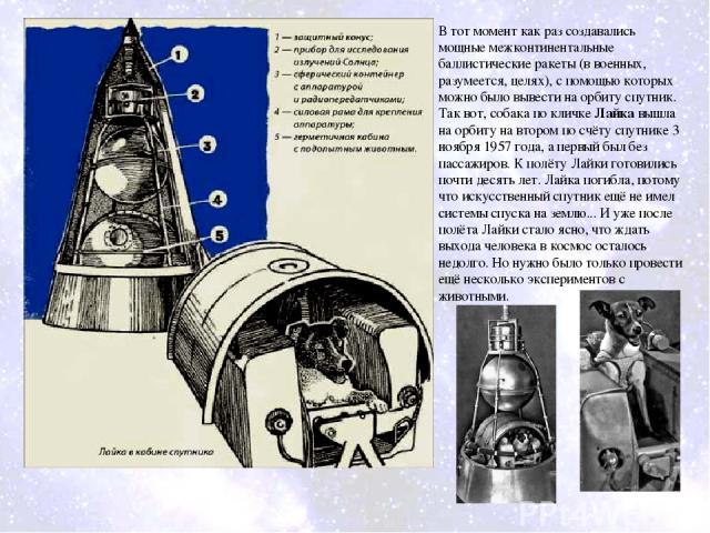 В тот момент как раз создавались мощные межконтинентальные баллистические ракеты (в военных, разумеется, целях), с помощью которых можно было вывести на орбиту спутник. Так вот, собака по кличке Лайка вышла на орбиту на втором по счёту спутнике 3 но…