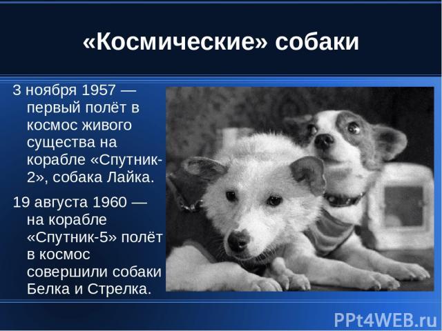 «Космические» собаки 3 ноября 1957 — первый полёт в космос живого существа на корабле «Спутник-2», собака Лайка. 19 августа 1960 — на корабле «Спутник-5» полёт в космос совершили собаки Белка и Стрелка.