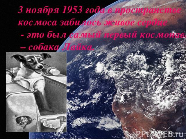 3 ноября 1953 года в пространстве космоса забилось живое сердце - это был самый первый космонавт – собака Лайка.