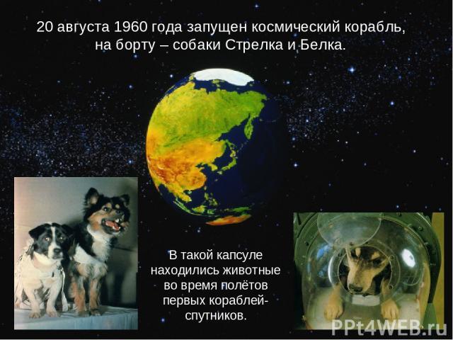 20 августа 1960 года запущен космический корабль, на борту – собаки Стрелка и Белка. В такой капсуле находились животные во время полётов первых кораблей-спутников.