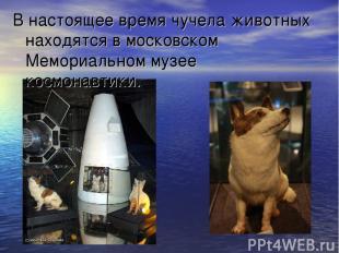 В настоящее время чучела животных находятся в московском Мемориальном музее косм