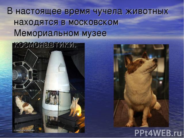 В настоящее время чучела животных находятся в московском Мемориальном музее космонавтики.