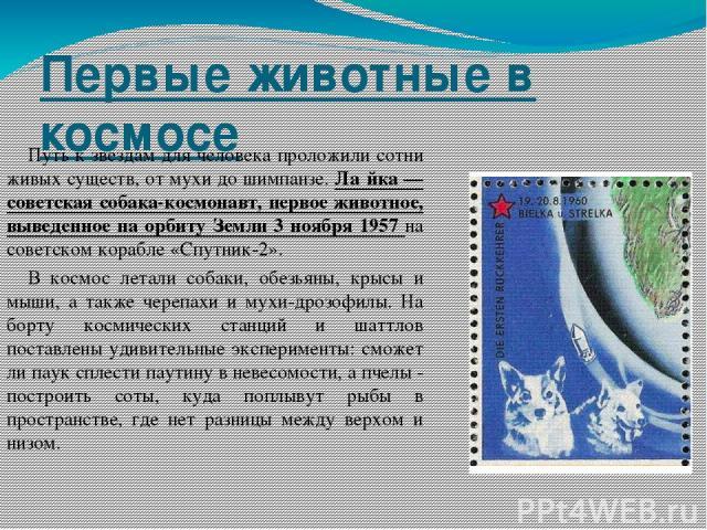 Первые животные в космосе Путь к звездам для человека проложили сотни живых существ, от мухи до шимпанзе. Ла йка — советская собака-космонавт, первое животное, выведенное на орбиту Земли 3 ноября 1957 на советском корабле «Спутник-2». В космос летал…