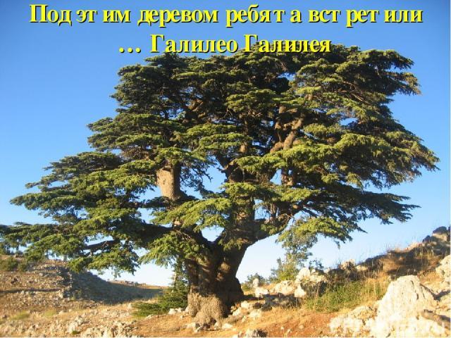 Под этим деревом ребята встретили … Галилео Галилея
