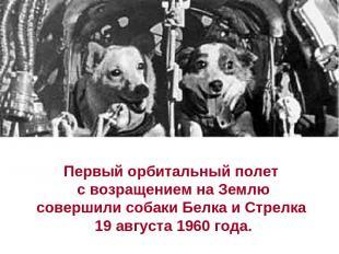 Первый орбитальный полет с возращением на Землю совершили собаки Белка и Стрелка