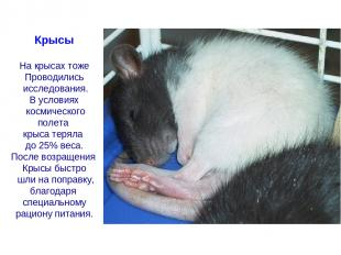 Крысы На крысах тоже Проводились исследования. В условиях космического полета кр