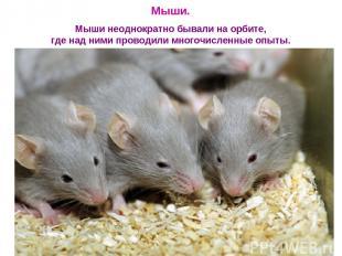 Мыши. Мыши неоднократно бывали на орбите, где над ними проводили многочисленные