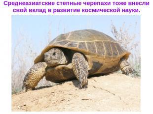 Среднеазиатские степные черепахи тоже внесли свой вклад в развитие космической н