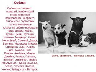 Собаки Собаки составляют, пожалуй, наибольший отряд животных побывавших на орбит