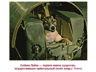 Собака Лайка— первое живое существо, осуществившее орбитальный полёт вокруг Зем