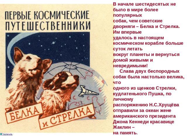 В начале шестидесятых не было в мире более популярных собак, чем советские дворняги – Белка и Стрелка. Им впервые удалось в настоящем космическом корабле больше суток летать вокруг планеты и вернуться домой живыми и невредимыми! Слава двух беспородн…