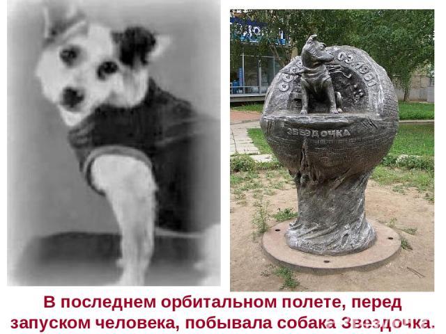 В последнем орбитальном полете, перед запуском человека, побывала собака Звездочка.