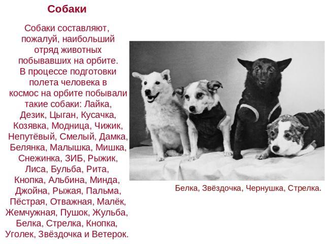 Собаки Собаки составляют, пожалуй, наибольший отряд животных побывавших на орбите. В процессе подготовки полета человека в космос на орбите побывали такие собаки: Лайка, Дезик, Цыган, Кусачка, Козявка, Модница, Чижик, Непутёвый, Смелый, Дамка, Белян…