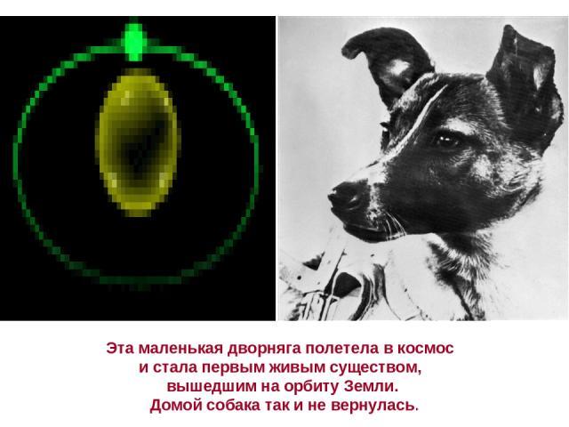 Эта маленькая дворняга полетела в космос и стала первым живым существом, вышедшим на орбиту Земли. Домой собака так и не вернулась.