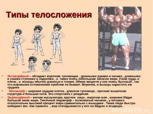 Типы телосложения Эктоморфный – обладает коротким туловищем , длинными руками и