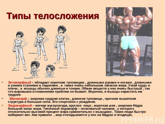 Типы телосложения Эктоморфный – обладает коротким туловищем , длинными руками и ногами , длинными и узкими ступнями и ладонями , а также очень небольшим запасом жира. Узкая грудь и плечи , а мышцы обычно длинные и тонкие. Обмен веществ у них очень б…